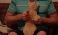 Katinas užvartojęs valerijono