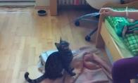 Nevykėlių kačių rinkinukas
