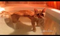 Katinas, kuriam nusišvilpt ant stereotipų