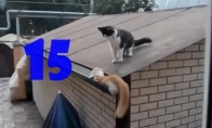 Funny Cats Compilation #15