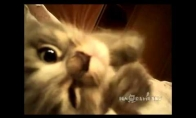Duoklė kačių mylėtojams
