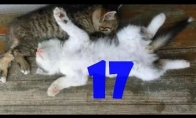 Funny Cats Compilation #17