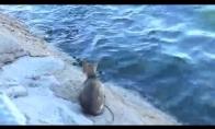 Žvejo katė