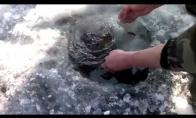 Kaip rusai karpius žvejoja