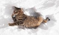 Katės prieš sniegą