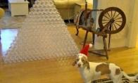 Geriausia Kalėdinė dovana šuniui