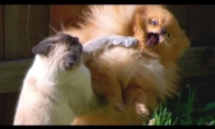 "Katinai ""dubasina"" šuniukus"