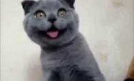 Laimingiausias pasaulyje katinas