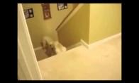 Šuniška tėvystė prieš katinišką tėvystę