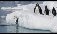 Prikolinančių pingvinų rinkinukas