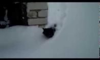 Žiaurus rusiško katino gyvenimas