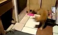 Katės ir žiurkės kova