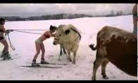 Žieminės karštų panelių pramogos