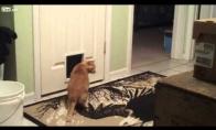 Kačių trolinimas