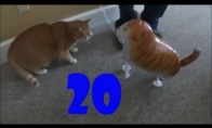 Funny Cats Compilation #20