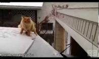 Katės ir skraidymas - nesuderinama