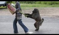 Kai gyvūnai trollina žmones