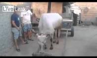 Išmanioji karvė