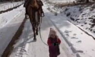 Mažoji arklių valdovė