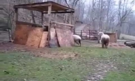 Kai aviną užaugina šuo