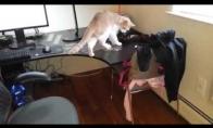 Kad katinas neliptų ant stalo
