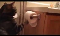 Keistas katės įprotis