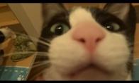 Šeimininko išsiilgęs katinas