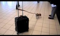 Mažų šuniukų nauda
