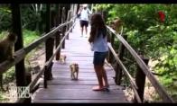 Beždžionės vs turistai
