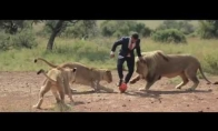 Liūtų valdovas