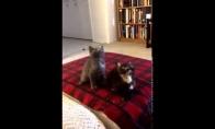 Klubiniai katiniukai