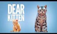 Katiniukas pasekėjas