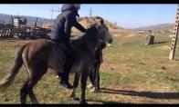 Žirgas greitesnis už Simaroną