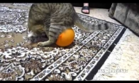 Žiaurus elgesys su gyvūnais