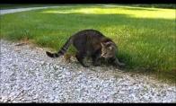 Vakarienė užpuola katę