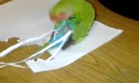 Puošnus paukštukas