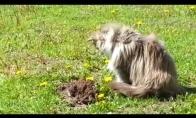 Katė prieš kurmį
