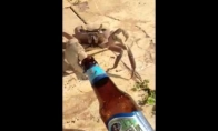 Krabas alkoholikas