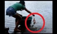 Kaip žvejojamos piranijos?