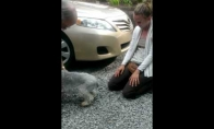 Iš laimės šuo net atsijungia