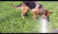 Šuo žudo vandenį