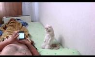 Putino katinas