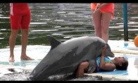 Išdykėlis delfinas