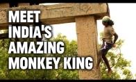 Žmogus-beždžionė