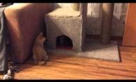 Katiniukas gina savo tvirtovę