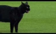 Katiniukas futbolistas