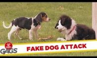 Lėlininkas trolina šunis