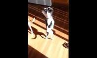 Optimistiškas dvikojis šunelis