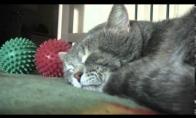 Katiniukas atsako į šeimininko kosėjimą