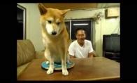 Nedraugiškiausias šuo pasaulyje